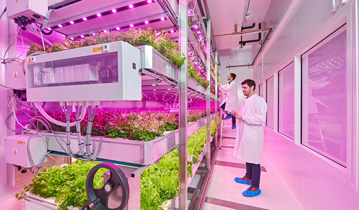 The role of sensors and data collection in a successful vertical farm