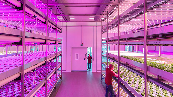 Climate rooms for indoor cultivation