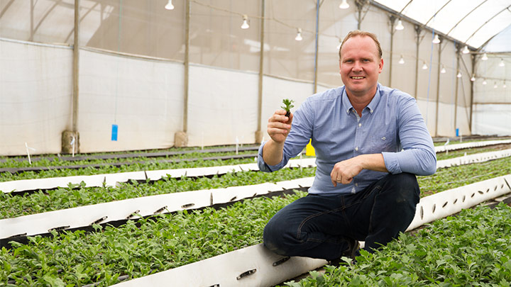 philips-lighting-helps-annual-and-perennial-cuttings-producer-and-breeder-florensis-kenya-to-prevent-early-blooming-and-achieve-93percent-energy-savings