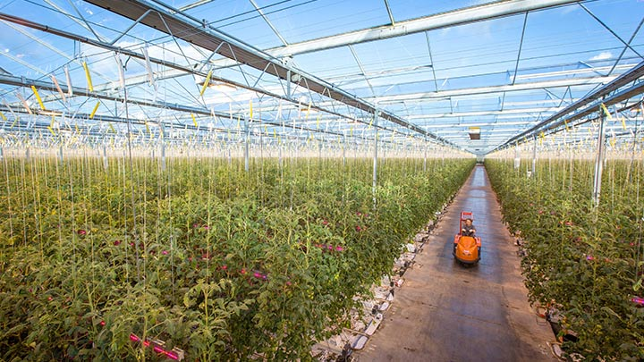Philips Lighting signs new horticultural LED lighting project with longtime partner Wim Peters