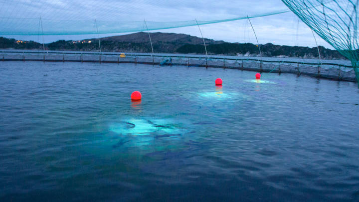 Aquaculture lighting innovation