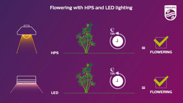 Flowering occurs with both HPS and LED, if the plants get at least 12 hours of full darkness